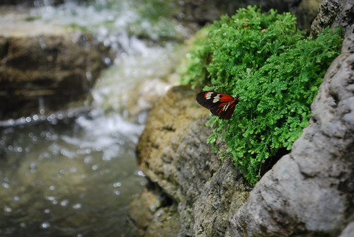 butterfly, water bokeh