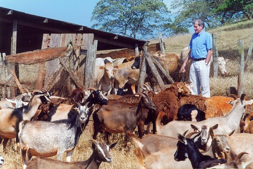 Carlos Sere amongst farm animals