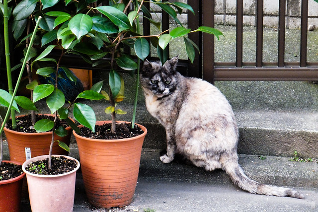 Today's Cat@2011-06-14