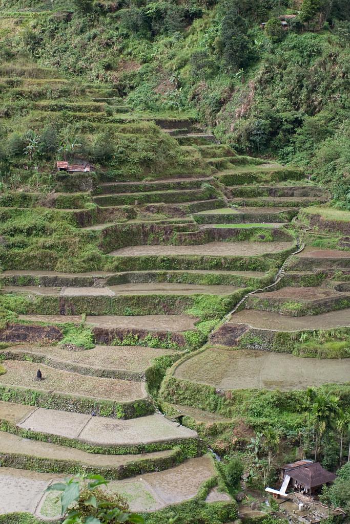 フィリピン・コルディリェーラの棚田群の画像 p1_33