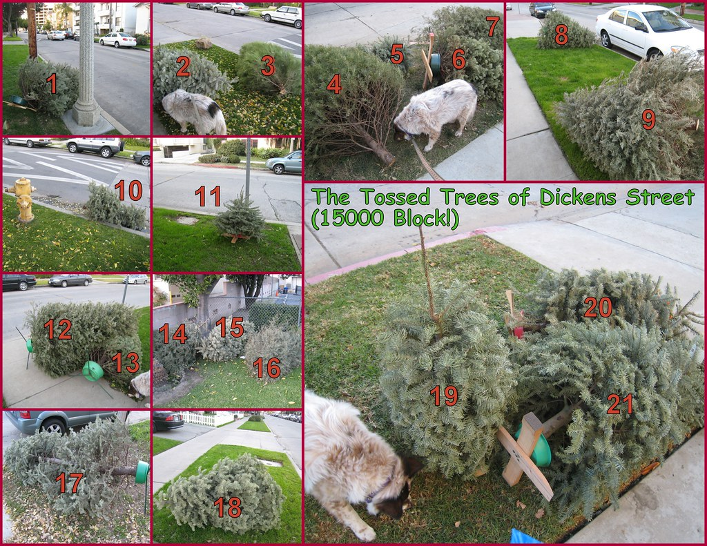 The Tossed Trees of Dickens