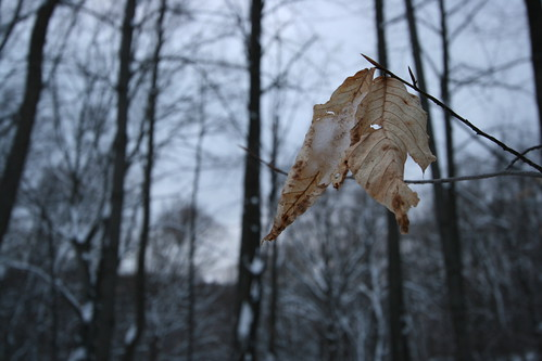 Photowalk 2 - One last leaf