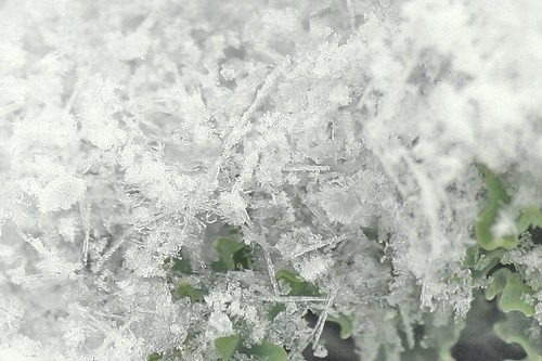 snow close up