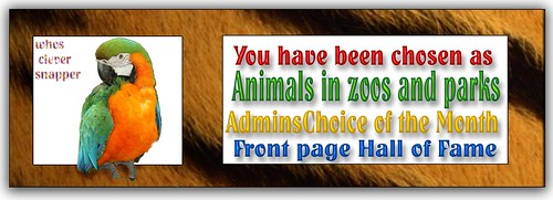 Animals in Zoos & Parks award