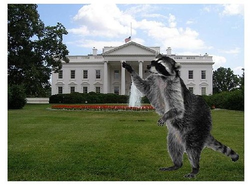 Masked Raiders Infiltrate White House