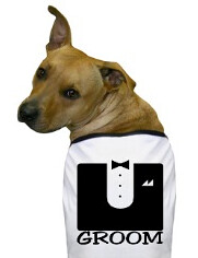 groom dog