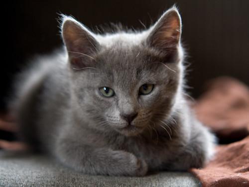 Kittens of Pegusha - Page 3 3299913067_162fd0e2b7