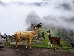 Machu Picchu with Llamas