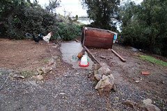 coop in yard