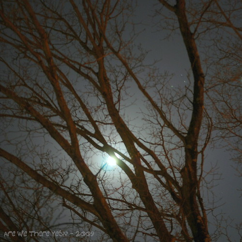 Moon behind the tree