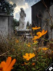 "Cemitério da Consolação - SP (GiS ::) Tags: show cemeteries art cemetery museum photography museu arte sãopaulo fine exhibit escultura cemitério artexhibit cimetière museus museumoffineart photographyshow museum"""