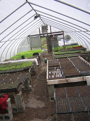 seedling greenhouse 4.2009