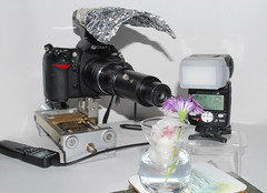 7x magnification focus stacking set-up (linden.g) Tags: