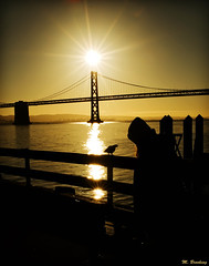 But for the Grace of God (Michael Brooking Photography) Tags: ocean life sanfrancisco morning bridge sun reflection bird love church easter death hope star pier dock peace christ god dove glory faith homeless grace baybridge rise michaelbrookingphotography