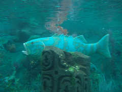 The Grouper, or giant sea bass (spajadigit) Tags: disneyland submarines findingnemo