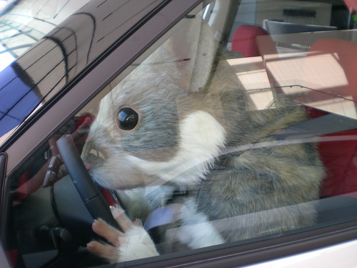 Kia Soul Hamster. Hamster driving a Kia Soul