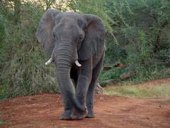 Elephant Surprise