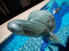 Bottlenose Dolphin (Rick Insane Diego...) Tags: jumping dolphin sigma lajolla nik 1020mm utc glamourglow