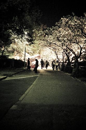 OR0904170017 : Sakura2009 #60