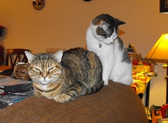 Nina & Victor (Tabbymom Jen) Tags: cats cat chair glare tabby flash victor nina tailgating torbie evilflash