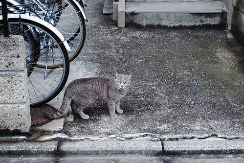 Today's Cat@20090513