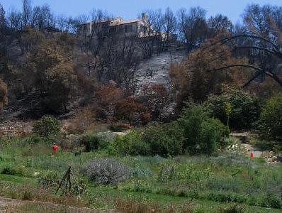 Santa Barbara Botanic Garden Across the Meadow