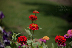 Flowers at Chetal Grand (Tarun Chopra) Tags: flowers portrait india mountains nature canon photography asia wizard greatshot dslr gurgaon purchase bharat newdelhi touristattractions gangotri photograpy chamba canoncamera dhanaulti macroshots nicecomposition harsil hindustan greatcapture harshil indiaimages perfectcomposition traveltoindia superbshot superbphotography colorphotoaward fantasticimage betterphotography discoverindia makemytrip hindusthan earthasia smartphotography canonefs55250mmf456islens flickrbestshots uthrakhand mustseeindia uterkashi onthewaytoharidwar discoveryindia buyimagesofindia