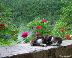 Glorious spring!!! (Xena*best friend*) Tags: wood wild italy pet cats fur chats spring furry woods feline tiger kitty kittens whiskers piemonte gato paws cripple gatto katzen feral wildanimals 5megapixel hardlife catslife canondigitalixus50 3paws piedmontitaly zoppa ancestress
