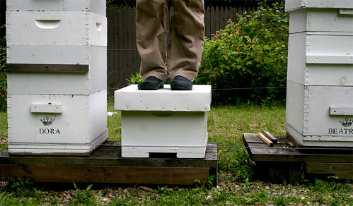 Bench Monday: beekeeping edition