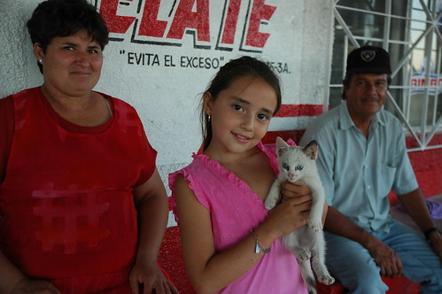 White kitten with blue eyes from hell gets adopted by a sweet little girl, after a night in a mechanics shed changed that cats attitude, between San Bruno and San Rosalia, Baja California Sur, Mexico by Wonderlane