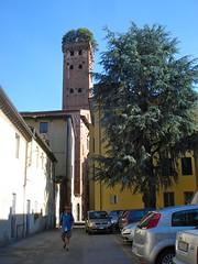 Lucca - Torre Guinigi - 12