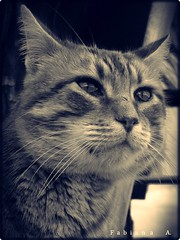 miauuuuuuuu!!!!!!!! (Fabiana A.) Tags: animal gato aplusphoto platinumheartaward