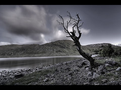 Lone Tree in the Silent Night (edmundlwk) Tags: ireland mountain lake tree galway water night landscape connemara f28 hdr 12bens connemaraloop inaghvalley canon450d flickrchallengegroup flickrchallengewinner tokina1116mm edmundlim