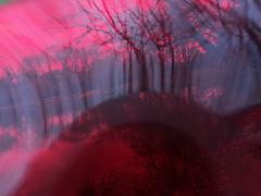 DSC01295 (Réflexion Automatique) Tags: life new wood color tree art nature saint forest high experimental exposition vision filter drug psychedelic arbre libre couleur forêt bois etang solaire nazaire univers magique acide dimention estuaire 44600