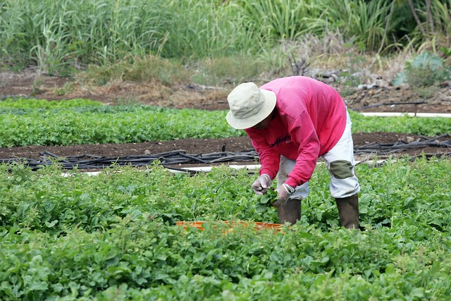 Affordable ag land, money, knowledge: Ingredients for cultivating Hawaii's food future