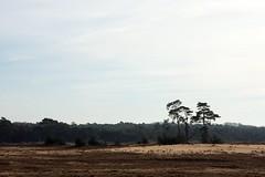 National Park de Hoge Veluwe (F.d.W.) Tags: park wood trees holland tree netherlands dutch canon landscape nationalpark highlands high bomen sand woods europa europe nederland boom national eeg sands bos veluwe landschap eec zand hogeveluwe dehogeveluwe nationaalpark bibble nationaal fdw nationaalparkdehogeveluwe nationalparkdehogeveluwe bibblepro abovesealevel canoneos40d canon40d fransdewit