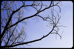 IceStorm09-21 (chuck.heeke) Tags: kentucky icestorm louisville january2009
