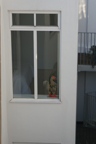 cock in the window