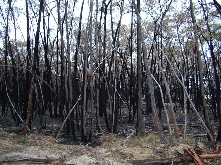 Burnt Landscape