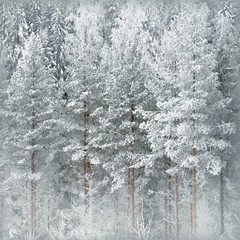 Winter Time (Olli Keklinen) Tags: winter snow color forest photoshop suomi finland square woods nikon 100v10f 2009 gettyimages d300 500x500 bsquare ok6 ollik winner500 20090218