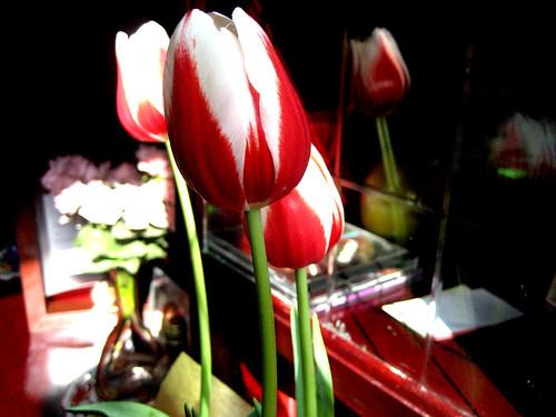 Tulipanes *-*