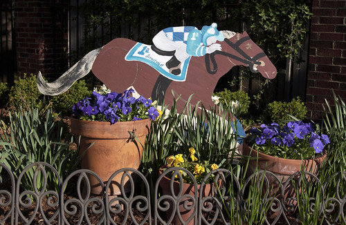 a wooden derby horse with blue and white jockey silks and brown horse and two clay pots in front with blue pansies in garden with yellow daffodils