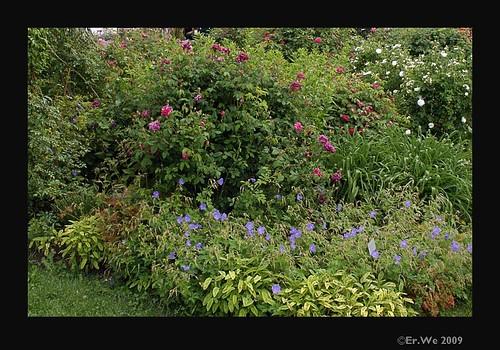 Seitenstetten hofgarten-  pflanzenkombinationen 1  2005-06