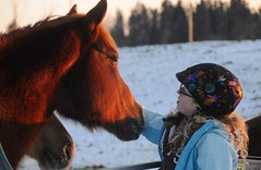 Sunset Lighting (Photo Twister) Tags: horses horse canada cold love edmonton warmth riding 25 alberta colchester 25c sunsetlighting