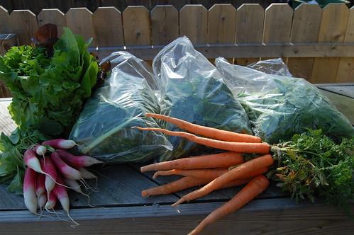 First veggies of spring