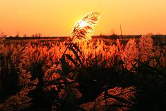 Fili di rame / Copper strings (AndreaPucci) Tags: sunset italy lake lago italia tramonto lucca tuscany toscana canoneos400 massaciuccoli canonefs1855mm3556 filidirame andreapucci flickraward5 copperstrings