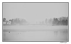 misty islands (harrypwt) Tags: harrypwt helsinki misty e520 munkkiniemi coastal fog tree reflection monochrome bw paintinglike