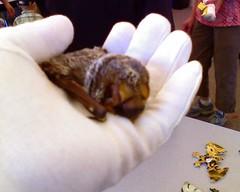 More bat cuteness