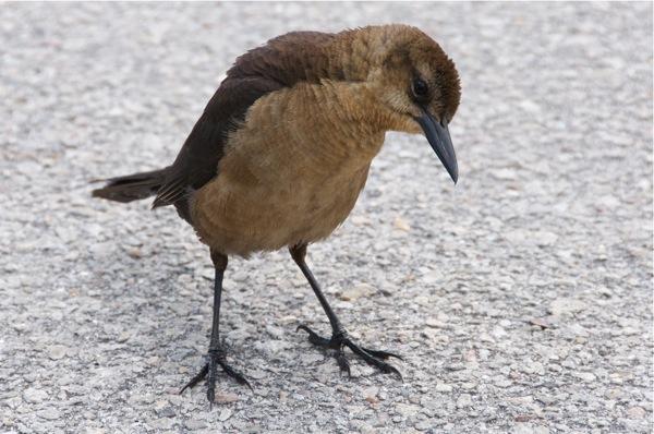 bird_0037