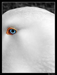 The Bird (Ben Heine) Tags: original wild white bird eye art nature animal composition print fur coast seaside poem eyelashes dinosaur belgium belgique head seagull details kitsch cte oeil yeux digitalpainting framing worm ogen minimalism copyrights poil blanc oiseau pur tte ver ecosystem oog alfredhitchcock oie sauvage cil hoofd emilydickinson lessismore wacomtablet pupille pelage fourure benheine conceptualphoto abirdcamedown abstractedphoto infotheartisterycom